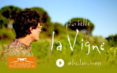 Pluse Belle La Vigne #3 : l'éclaircissage