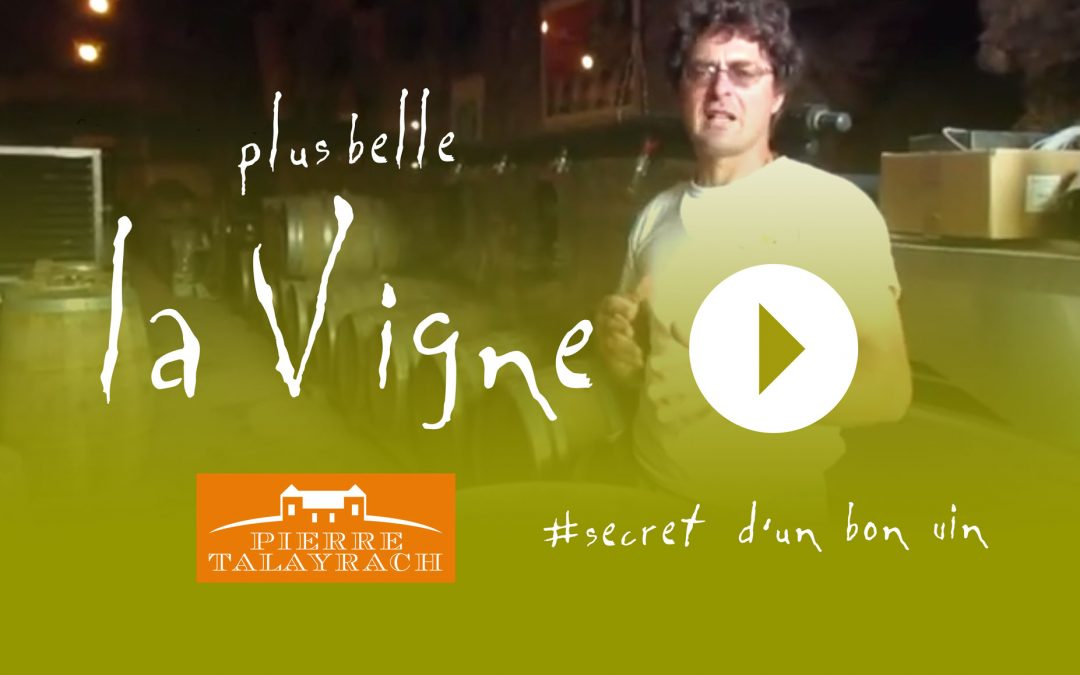 Plus Belle La Vigne #12 : Le Secret d'un Bon Vin