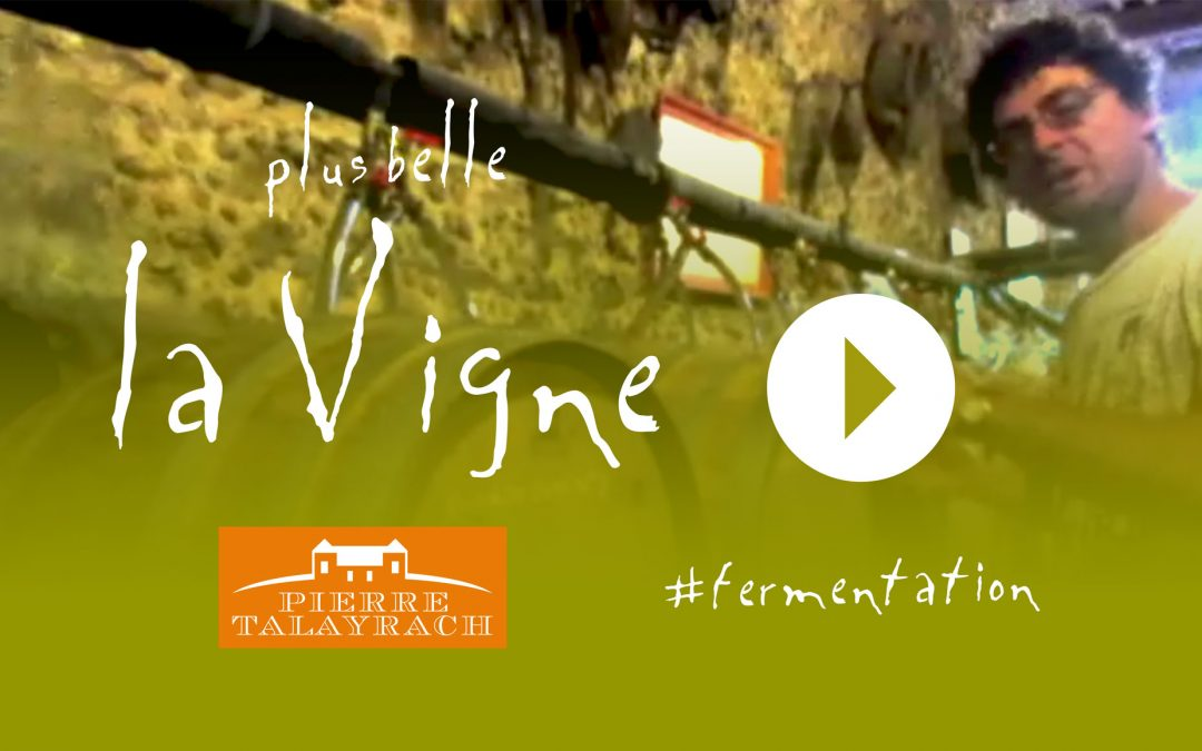 Plus Belle La Vigne #14 : La Fermentation