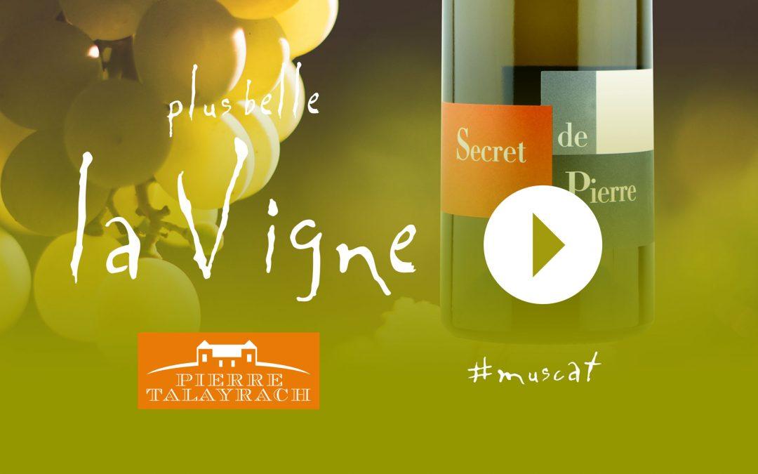 Plus Belle La Vigne #15 : Le Muscat de Pierre