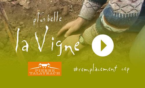 Plus Belle La Vigne #22 : Remplacer un cep de vigne